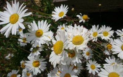 Re-Wilding Your Garden